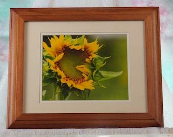 Sunflower photo matted in oak frame