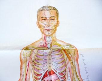 1970 PosterXL Vintage Anatomy Organs Skeleton Human Body Poster Medicine Wall Art