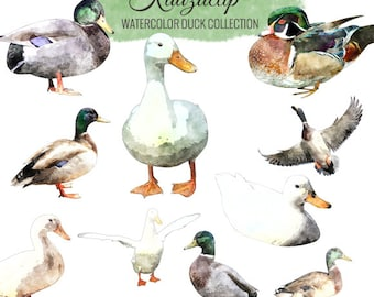 Watercolor Duck Collection - Commercial and Personal Use