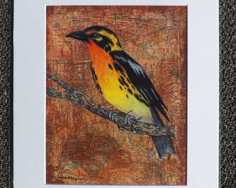 Western Tanager (11X14 Matted Print)
