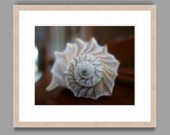 SEASHELL #18 - Framed Art Photography, Home Decor, Wall Art, Nature, beach, seashells, ocean