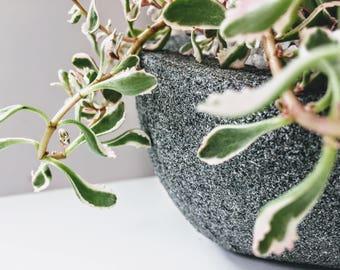 Concrete Jungle, pot plant , cactus , mini plants , home decor , concrete , bowls , plants , unique decor , plant stand , timber, handcraft.