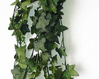 Ivy, Real Ivy, Preserved Ivy!  Simply Beautiful  A MUST HAVE!!!!