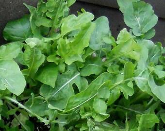 Arugula Roquette  150+ Heirloom seeds
