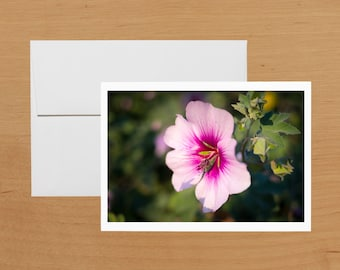 Hibiscus: flower photo greeting card