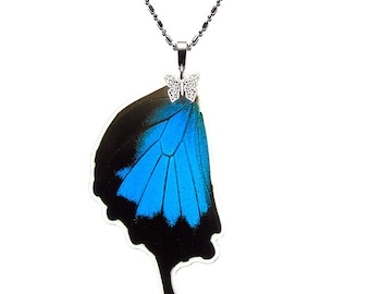 Real Butterfly Wing Pendant / Necklace (Papilio ulysses Hindwing - N021)