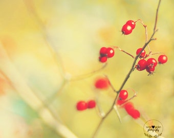 nature photography, red wall art, pretty photo, nature print, home decor, gifts for her, berries, lensbaby, fine art photography, art, print