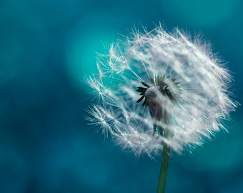 blue photography, dandelion photography, macro photography, fine art photography, home decoration, photoprint, mother's day