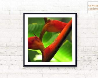 Botanical Print ~ Large Wall Art ~ Plant Print ~ Printable Poster ~ Tropical Decor ~ Digital Download ~ Modern Decor ~ Flower Print