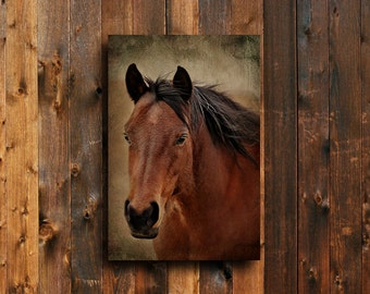 Windy - Horse photography - Horse Art - Animal Photography - Horse decor - Western decor