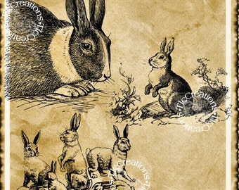 Bunch of Bunnies, Vintage Image Graphic/Image Transfer