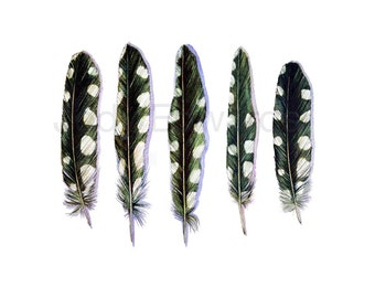 Woodpecker Feathers Archival Print - Based on the Original Watercolors