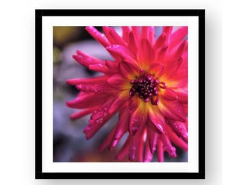 "Newport Black Framed 15.5 x 15.5 or 19.5 x 19.5 ""Hot Pink Dahlia"" Wall Decor"