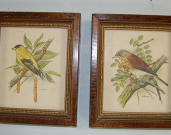 Ph Gommer Bird Prints