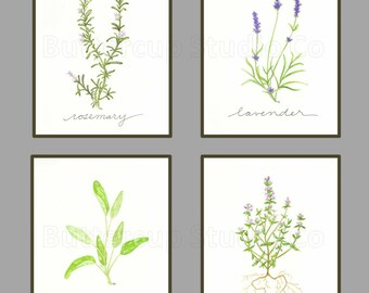 Collection of 4 Herbs, 8x10