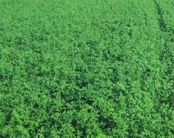 Bulldog 505 Alfalfa Seed