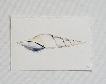 sea shell, original watercolor and ink painting