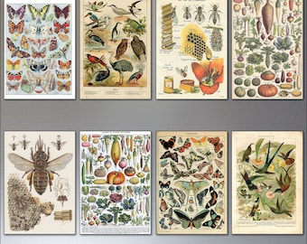 Birds, Bees and Butterflies Victorian botanical prints fridge magnets set of 8