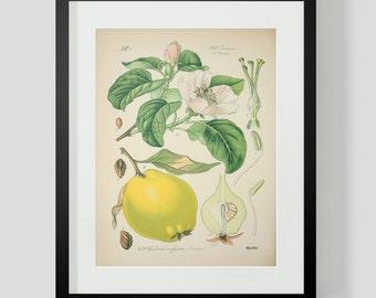 Botanical Pear Print Plate 419