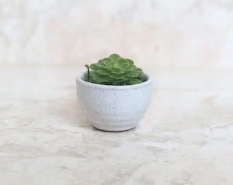 Mini White Simple Succulent Planter - Live Succulent Included - Small Succulent Planter