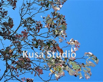 Downloadable Print Leaves Against Blue Sky Photography