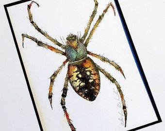 Spider Original Drawing, Framed Ink and Watercolor Drawing, Framed Spider Art, Original Watercolor Ink Drawing, Framed Art