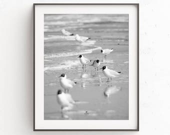 Seagulls on the beach, photography, posters, coast, beach, sea, birds, nature, poster, print, Fine art, black and white, boho, waves