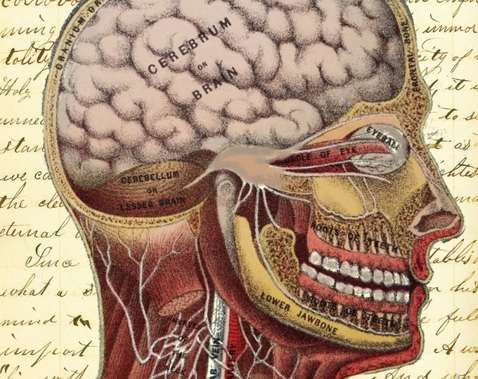 Human head brain vintage medical image doctor medical student teacher gift art print custom choice background from antique paper MD300