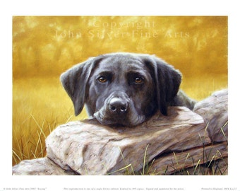 Black Labrador retriever Limited Edition Print. Personally signed and numbered by Award Winning Artist JOHN SILVER. jsfa012