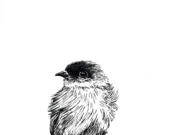 Cute Bird Print Hand Drawn Original Art Illustration