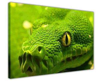 Green Anaconda on Framed Prints Canvas Wall Art Pictures Home Decoration Nature Landscape Photos 18 mm Thick Frame