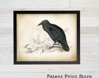 Raven Art Print. Raven Poster. Vintage Raven Illustration. Raven Illustration. Raven Bird. Bird Art. Black Raven Bird. Oddities Art. 102