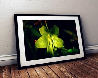 wild orchid, green, garden, thornton burgess society, east sandwich, cape cod, massachusetts, new england, photography, fine art print