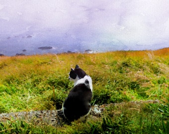 The Cat & the Sea