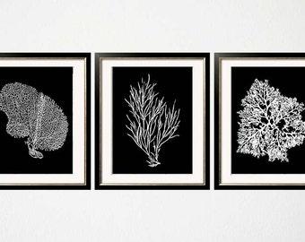 Black and White Sea Coral Wall Art, Balck White Coral Print, Black White Wall Art, Black Home Decor, Coral Print, Set of three