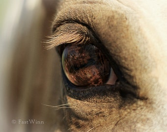 horse photograph horse art horse photo hrose decor Palomino horse wall art horse gift photography horse eye southwestern decor western decor