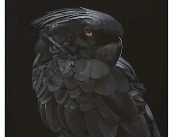 Prolonging Revenge Through Reincarnation 24 x 18 Art Print - Bird - Cockatoo - Parrot - Nature - Animal - Giclee - Gift