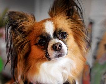 Ribbon Harness dogs pet  collegiate