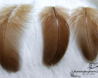 """Bulk Feathers Cruelty Free Feathers Real Bird Feather Natural Feathers Wholesale Real Feathers Loose Feathers For Crafts Qty 50 1.5-2.5"""""""