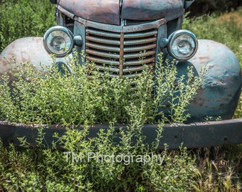 Old Chevy Truck - Old Truck- Old Truck in the Weeds-Weeds in the Grill -Rusty Truck - Rusty Chevy - Rusty Chevy Truck