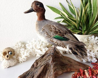 Vintage taxidermy duck mounted real bird standing mount wood base shabby rustic man cave decor