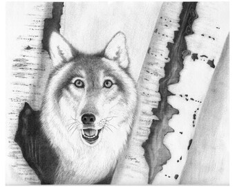 Wolf - 11 x 14 Matted Print
