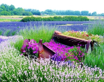 Flower Photography, Lavender Fields, Lavender Photo, Nature Photograph, Floral Landscape, Purple Flowers, Floral Art, Flower, Fine Art Print