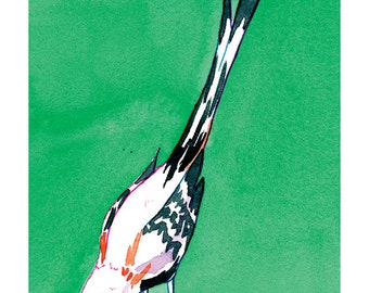 State Birds - Scissor-Tailed Flycatcher