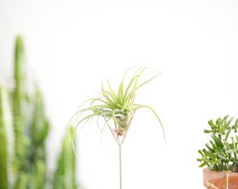 Small Size | Speckled White Air Plant Stand - tillandsia, plant stand, terrarium, modern, succulent,  zen, office gift, desk accessory