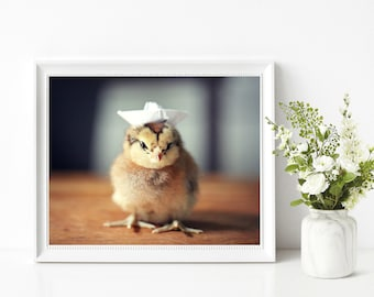 Chickens Print Chick Wearing A White Sailor Hat Funny Baby Animal Photograph 8x10 (1)