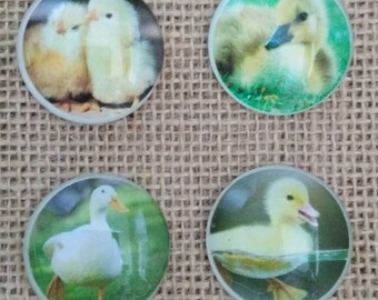 Chick Magnets - Duck Magnets - Farm Magnets - Refrigerator Magnets - Country Decor