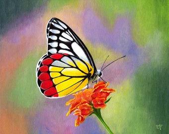 Painting original hyparete Jezebel Butterfly