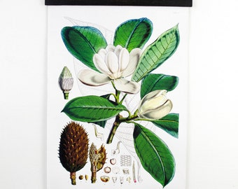Pull Down Chart - Botanical Magnolia Reproduction. Vintage Science Plate Print Educational Diagram Flowers Garden Seed Packet - CP218CV