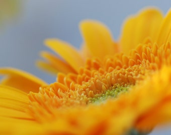 Gerbera Daisy Photograph, Yellow Flower, Dreamy Photography, Flower Photography, Digital Download, Printable Art, Cottage Decor